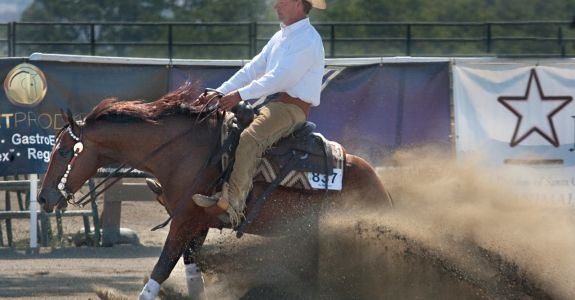 2010 bay gelding by Rooster